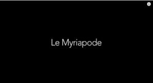le myriapode2